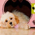 Как приучить щенка к домику?