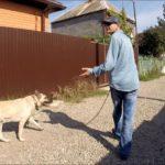 Прогулка с собакой: учимся контролировать питомца