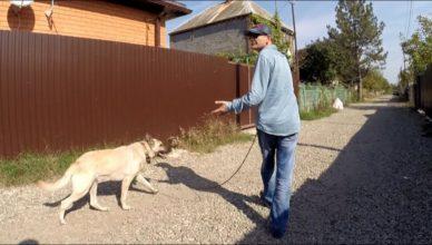 как контролировать собаку на прогулке