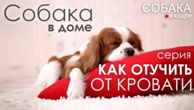 отучаем собаку гадить на кровати или диване
