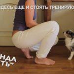 Как дрессировать собаку? 8 правил дрессировки - видео-урок