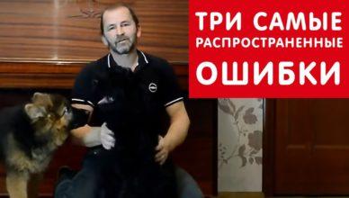 воспитание щенка: три ошибки