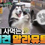 Этот пёс научился покупать куриный шашлык
