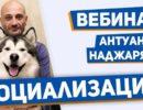 Антуан Наджарян видео вебинар Социализация собаки. Обучение поведению в человеческом обществе