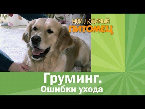 Ошибки самостоятельного ухода за шерстью собаки