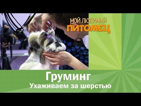 Как самостоятельно ухаживать за шерстью собак. Как и чем нужно вычесывать питомца? Подбор косметики