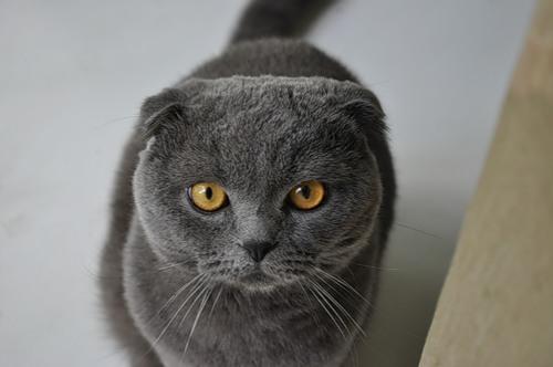 Гриппом A/H1N1 впервые заболел кот