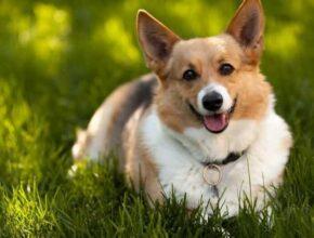 10 фактов о собаках, которые вы не знаете