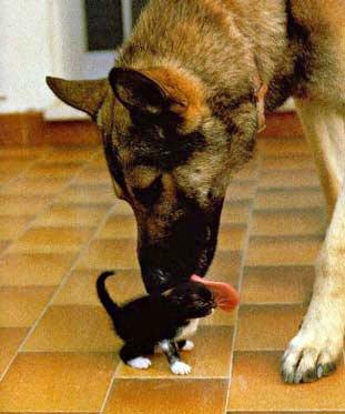 собаки и кошки друзья