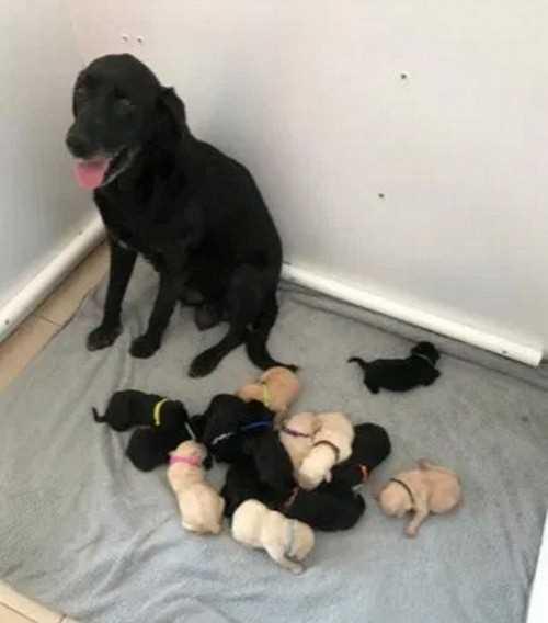 собака-рекордсменка со своими щенками
