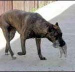 Брошенных котят усыновила бойцовая собака
