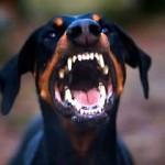 Агрессия у собак: о чем помнить и как защититься