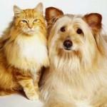 Собаки и кошки подражают хозяевам, чтобы выжить