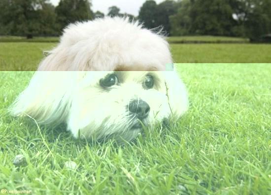 Собака защитит от аллергии