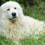 В России утвержден список самых опасных пород собак