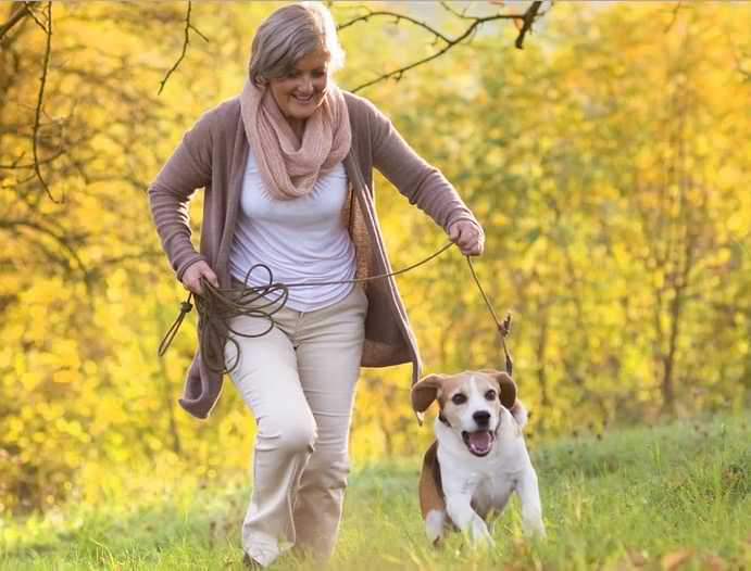 активная собака на прогулке