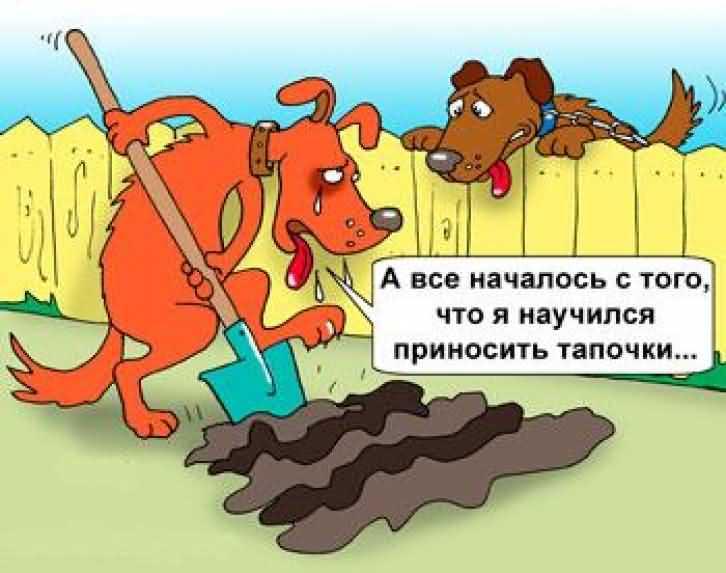 Анекдоты и смешные истории про собак