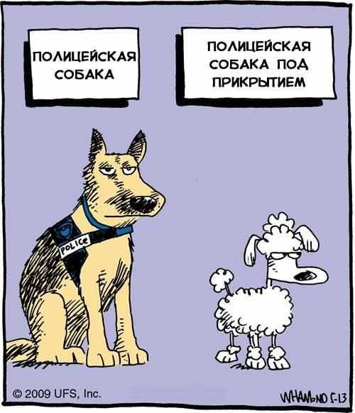 Очень смешной анекдот про собаку, её хозяина и соседа
