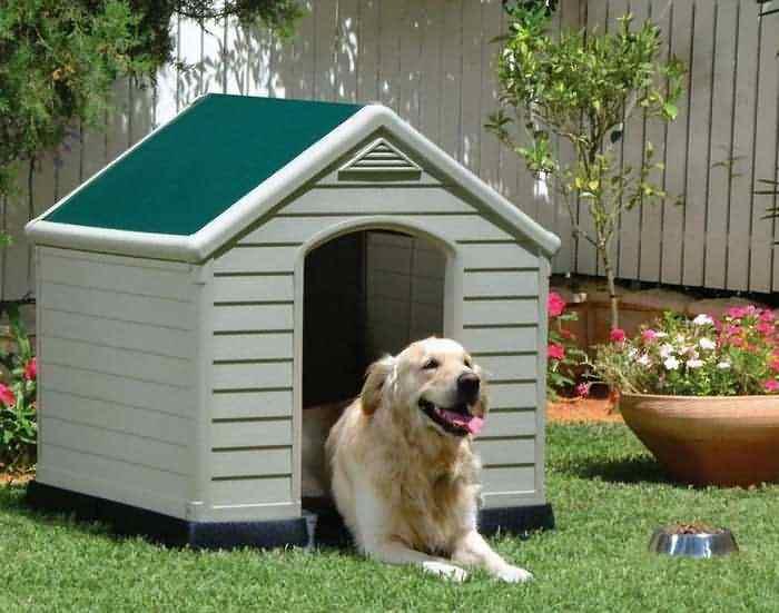 крупная собака во дворе