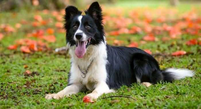 какие породы собак самые быстрые