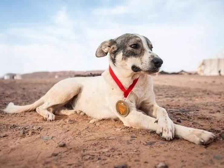 собака по имени Кактус, марафонец