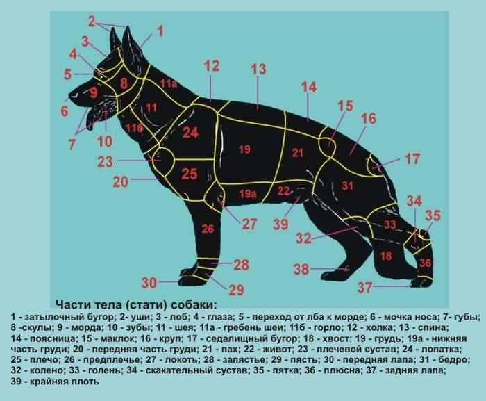 части тела собаки