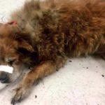 Собака-герой Че спас хозяйку и её соседей во время пожара