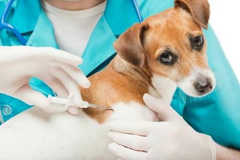 как происходит чипирование собак
