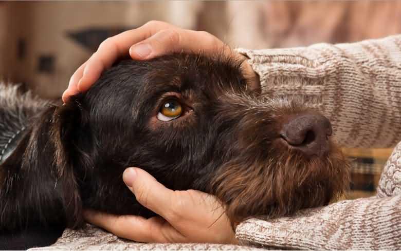 чувствуют ли собаки плохих людей