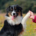 Кликер для собак - что это такое и как использовать эффективно