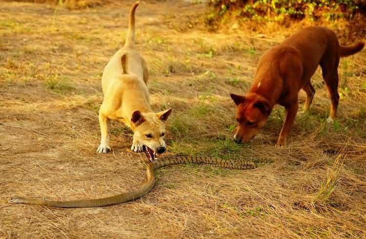 Собаки спасли женщину от змеи