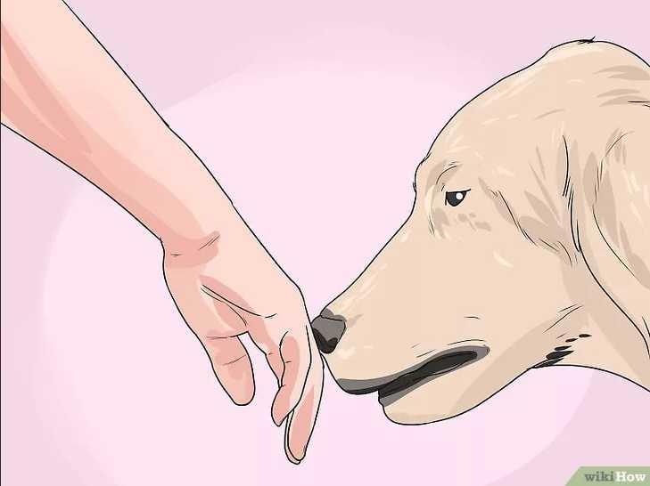 дайте собаке обнюхать руку
