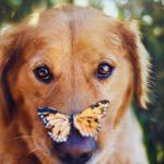 Самые милые детские стихи про собак от Зоси Собачкиной