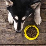 Как правильно выбрать диетический корм для собаки?