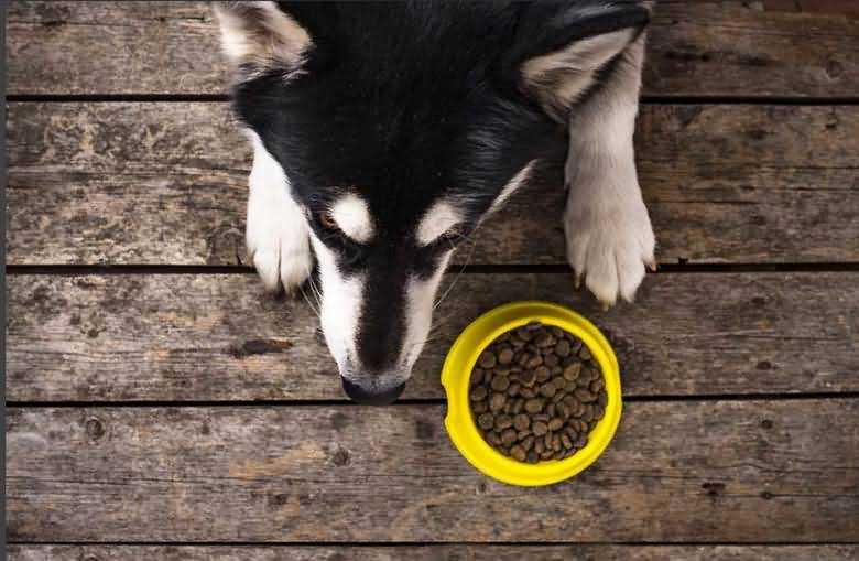 диетический корм для собак