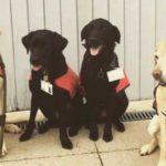 Собаки стали официально сотрудниками университета Мидлсекса, чтобы помочь студентам справиться со стрессом