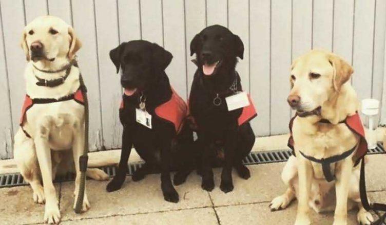 собаки помогают студентам университета справиться со стрессом
