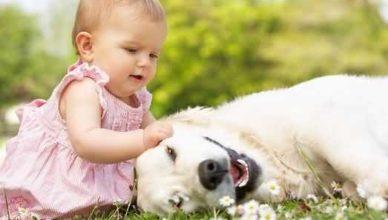 самые добрые собаки