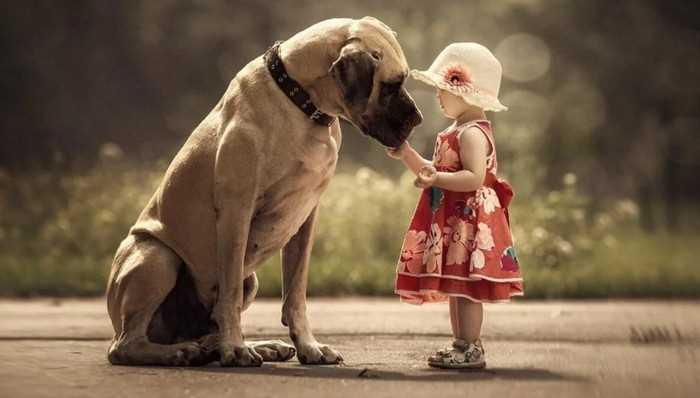 собачья доброта