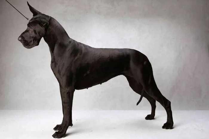 топ самых быстрых пород собак в мире