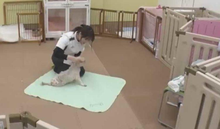 дом престарелых для собак в Японии