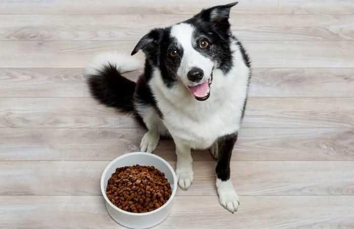 норма сухого корма для собаки