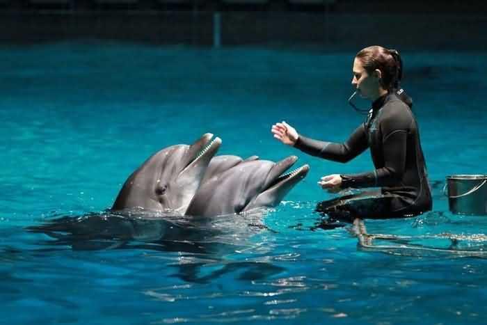 дрессировка дельфинов с помощью свистка