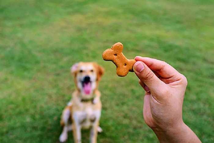 вознаграждение для собаки
