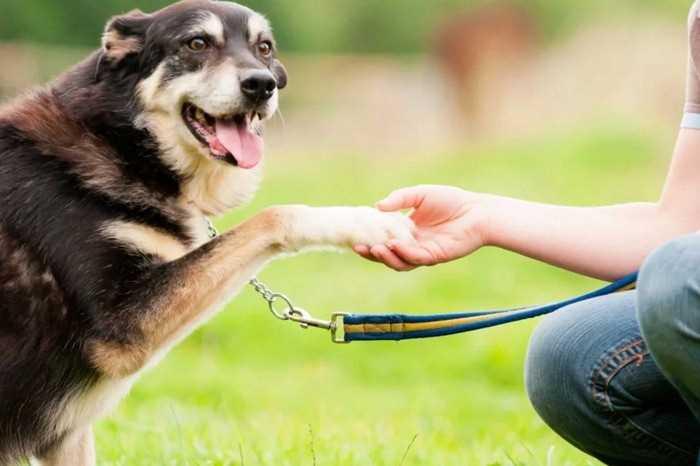 обучение пожилой собаки