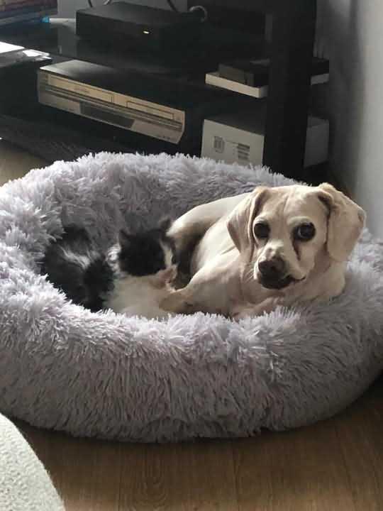 пёс Герцог и спасенный им котенок Борис