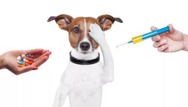 собака боится глистогонных для собак