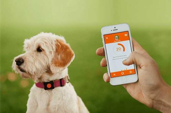 GPS ошейник для собаки