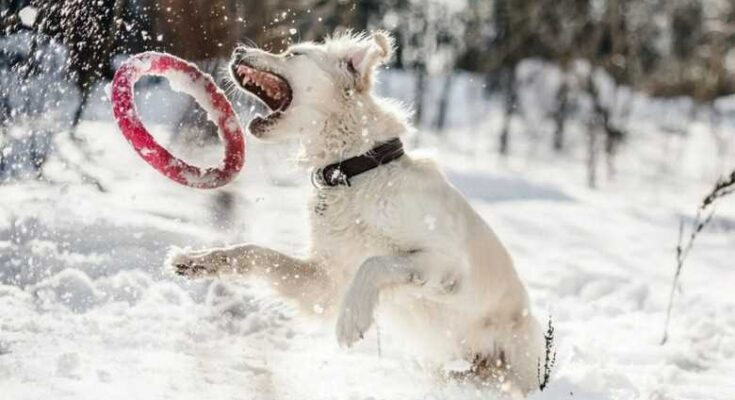 зимние игры с собакой в снегу