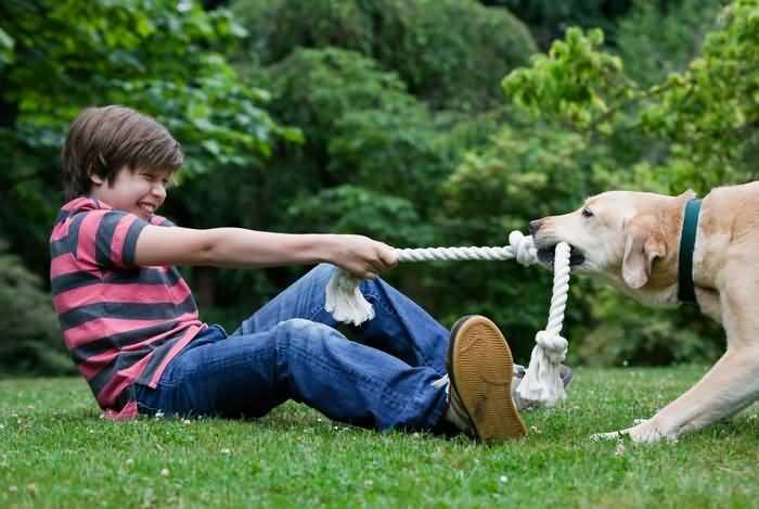 как показать собаке что ты её очень любишь -почаще с ней играй